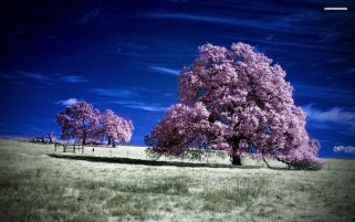 Purple Trees Blue Sky Field wallpapers and stock photos