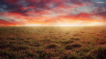 Red Clover Field & Sky wallpapers and stock photos