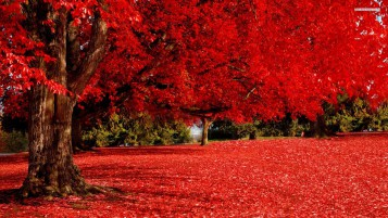 Random: Red Autumn Tree & Carpet