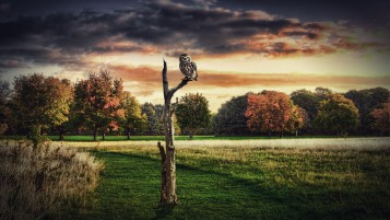 Autumn Trees Owl Grass Field wallpapers and stock photos
