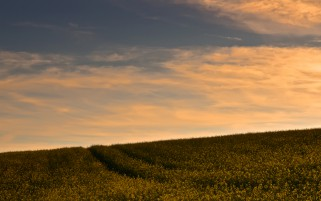 Rape Field & Orange Clouds wallpapers and stock photos