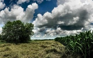 Nice Corn Fields Trees Clouds wallpapers and stock photos