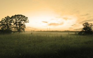 Grass Field Trees Orange Sky wallpapers and stock photos