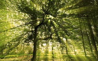 Sunny Forest wallpapers and stock photos