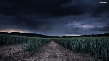 Wheat Field Path Stormy Sky wallpapers and stock photos