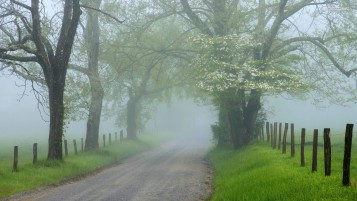 Foggy Road Trees Grass Fence wallpapers and stock photos