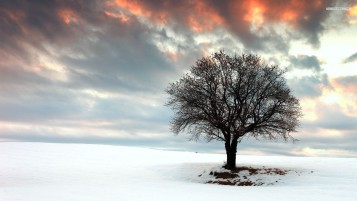 Previous: Lovely Tree & Winter Field