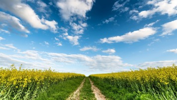 Nice Rape Field Path Sky wallpapers and stock photos