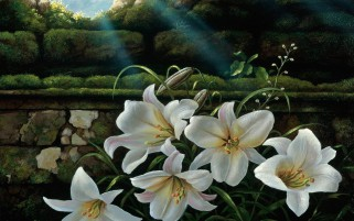 Hidden Lilies wallpapers and stock photos