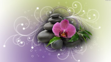 Purple Orchid & Black Stones wallpapers and stock photos