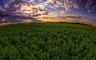 Green Field & Purple Clouds wallpapers and stock photos