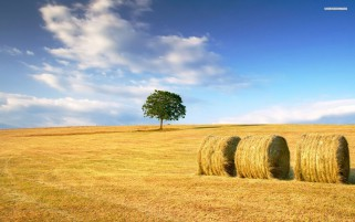 Random: Golden Hay Bales Field Tree