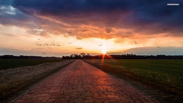 Stone Road Fields Birds Sunset wallpapers and stock photos