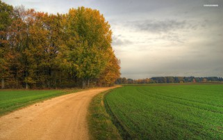 Random: Autumn Forest Road Fields Sky