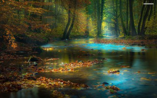 Calmy River Leaves Forest wallpapers and stock photos