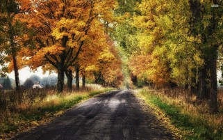 Random: Pretty Autumn Forest & Road