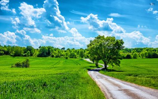 Grass Fields Road Nubes Árboles wallpapers and stock photos