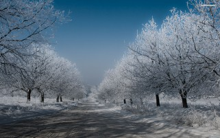 Endless White Road & Trees wallpapers and stock photos
