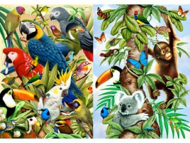 Jungle Animals Three wallpapers and stock photos
