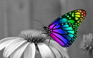 Rainbow Butterfly wallpapers and stock photos