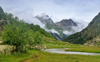 Mountains Trees Creek Foggy wallpapers and stock photos
