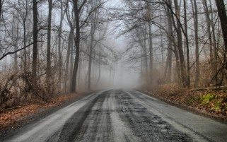 Mysterious Forest Road y brumoso wallpapers and stock photos