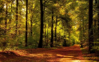 Autumn Path Forest Sunlight wallpapers and stock photos