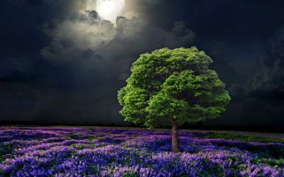 Random: Lilac Flowers Tree Moon Night