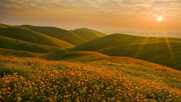 Yellow Flowers Hills Sunset wallpapers and stock photos