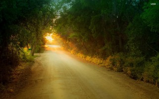 Atardecer Camino Niza Bosque wallpapers and stock photos