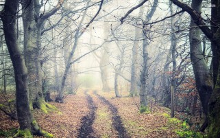 Foggy Trees Path Leaves Fences wallpapers and stock photos