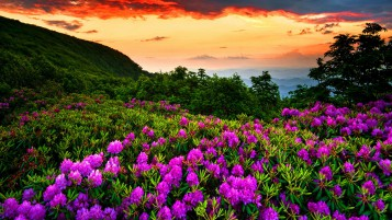 Purple Flowers Sunset Forest wallpapers and stock photos