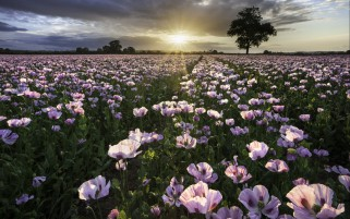 Softly árboles Flores Sunshine wallpapers and stock photos