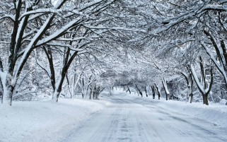 Thick Snowy Trees & White Road wallpapers and stock photos