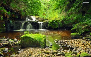Small Cascades Forest Stone wallpapers and stock photos