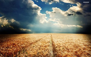 Random: Pretty Wheat Field Cloudy Sky