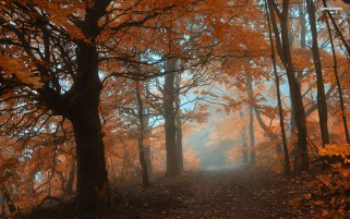 Orange Herbst Forest & Trail wallpapers and stock photos