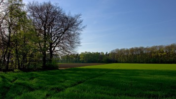Grass Field Arable Forest Sky wallpapers and stock photos