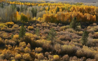 Golden Shades Of Autumn wallpapers and stock photos