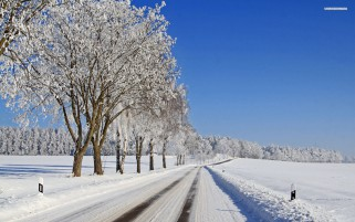 Deep White Fields Road Trees wallpapers and stock photos