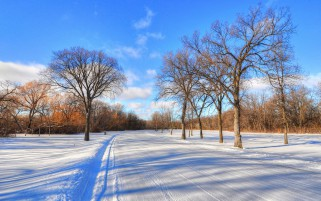 Wide Road Bare Trees Field wallpapers and stock photos