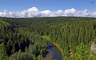River Through The Green Forest wallpapers and stock photos
