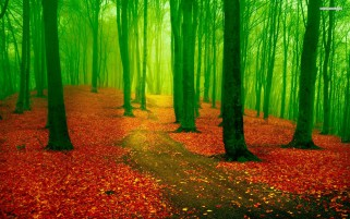 Red Leaf Carpet Green Forest wallpapers and stock photos