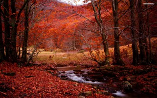 Red Forest Creek Leaves Stones wallpapers and stock photos