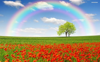 Poppy Field Trees Rainbow Sky wallpapers and stock photos