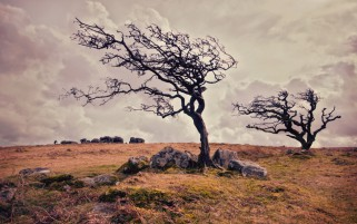 Old Trees Field Rocks Windy wallpapers and stock photos