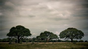 Nice Trees Gray Sky Field wallpapers and stock photos