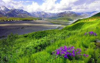 Mountain Plants Lilac Blossoms wallpapers and stock photos