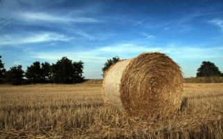Harvesting Field & Hay Bale wallpapers and stock photos