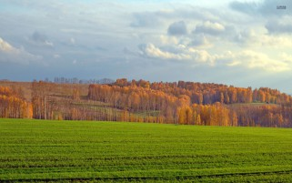 Random: Green Field & Autumn Forest